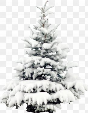 Snow Pine - Snow Tree Pine Christmas Wallpaper PNG