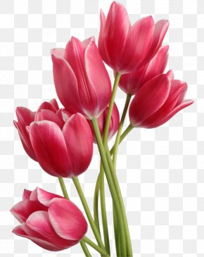 Tulips Image - Tulip Computer File PNG
