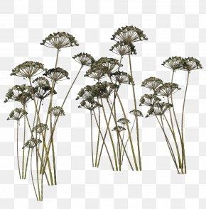 Plant,grass - Plant Clip Art PNG