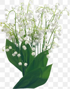 Lily Of The Valley - Lily Of The Valley Flower Clip Art PNG