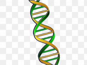 Green Chain Gene - DNA Nucleic Acid Double Helix Gene Green PNG