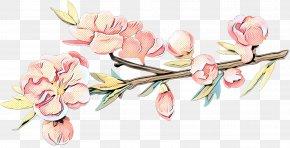 Plant Stem Magnolia Family - Floral Spring Flowers PNG