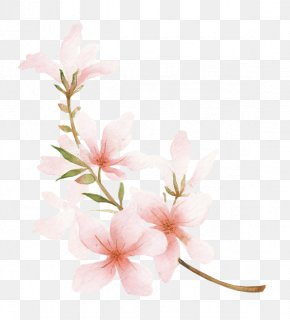 Peach - Blossom Drawing Peach Watercolor Painting PNG