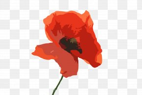 Poppy - Australia Common Poppy Flower PNG