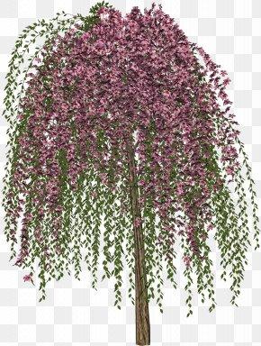 Lush Tree Top - Tree Drawing PNG