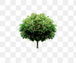 Tree - Tree Branch Trunk Icon PNG