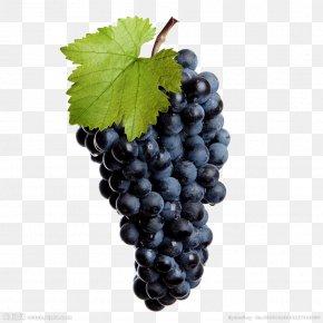 Black Grapes - Common Grape Vine Wine Isabella Stock Photography PNG