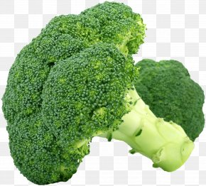 Cabbage Physical Map - Broccoli Slaw Leaf Vegetable Food PNG