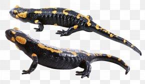Lizard - Lungless Salamander Barton Springs Salamander PNG