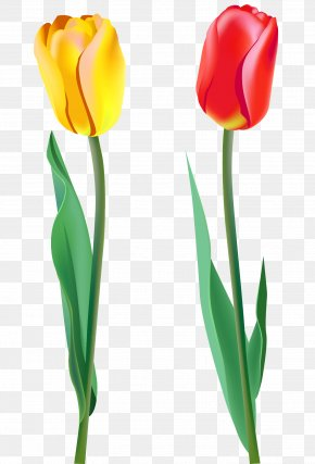 Spring Tulips Clipart - Tulip Clip Art PNG