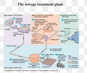 Sewage - Microorganism Water Treatment Sewage Treatment Activated Sludge Wastewater PNG