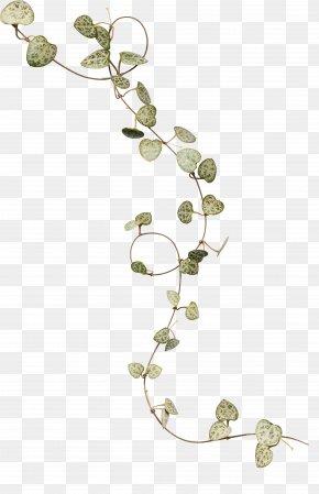 Ivy Leaves - Ivy Leaf Flower PNG