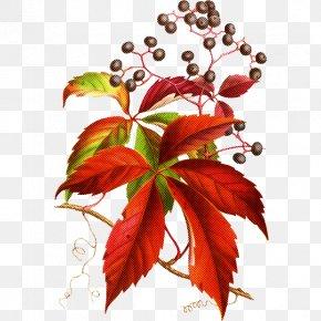 Plant Stem Tree - Leaf Flower Plant Red Tree PNG