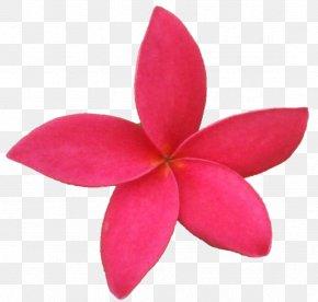 Tropical Flower - Belur Math Vrindavan Krishna Sri Sarada Devi Textiles PNG