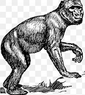 Monkey - Primate Chimpanzee Barbary Macaque Monkey Clip Art PNG