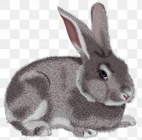 Grey Rabbit Clipart Picture - Rabbit Hare Clip Art PNG