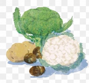 Cartoon Cauliflower Vegetables - Cauliflower Vegetable Broccoli Food Illustration PNG