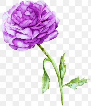 Ranunculus Peony - Watercolor Painting Stock Illustration Watercolor: Animals PNG