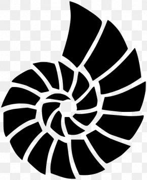 Seashell - Seashell Stencil Mollusc Shell Airbrush Painting PNG