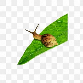 Snails - Snail Escargot Download PNG