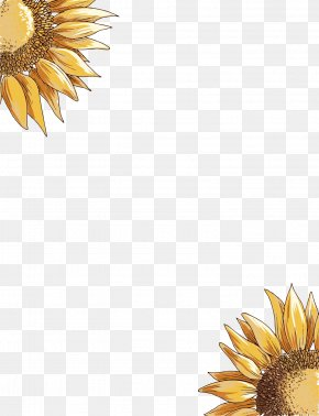 Yellow Sunflower - Common Sunflower PNG