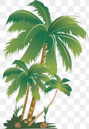 Coconut Tree - Arecaceae Tree Plant Areca Palm Fertilisers PNG