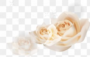 White Roses - Beach Rose Garden Roses Euclidean Vector White PNG