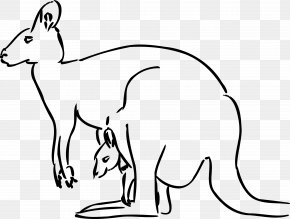 How To Create A Coloring Book - Kangaroo Free Content Clip Art PNG