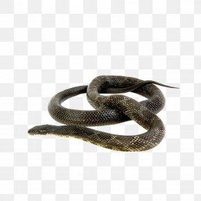 Snake - Snake Green Anaconda Reptile Russells Viper Animal PNG