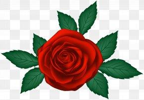 Red Rose Transparent Clip Art Image - Garden Roses Clip Art PNG