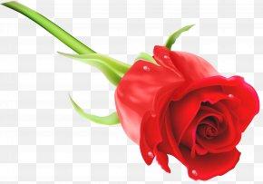 Red Rose Clip Art Image - Purple Clip Art PNG