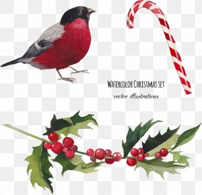Vector Birds - Watercolor Painting Christmas Illustration PNG