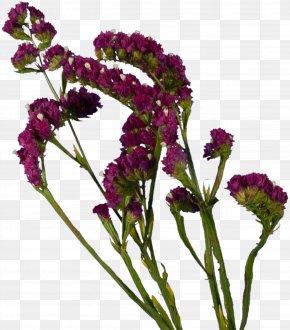 Spring Flowers - Cut Flowers Lavender Plant Violet PNG