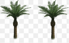 Tree - Arecaceae Tree Date Palm Clip Art PNG