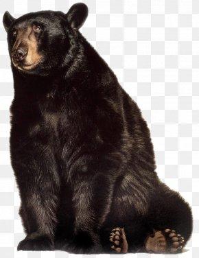 Bear - Grizzly Bear American Black Bear Gorilla Animal PNG