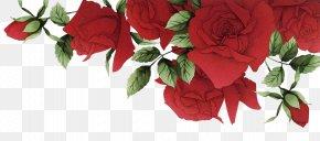 Romantic Red Roses Border - Garden Roses Beach Rose Red Flower PNG