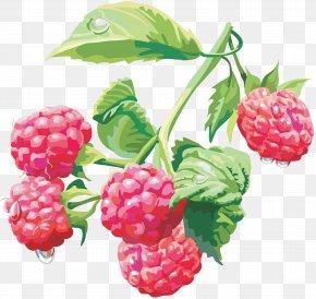 Rraspberry Image - Raspberry Clip Art PNG