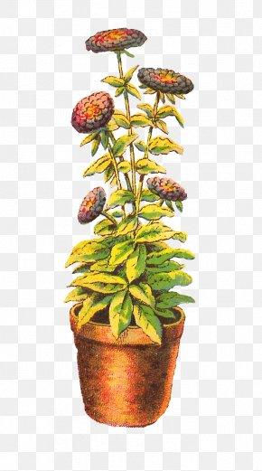 Flower Pot - Houseplant Chrysanthemum Drawing PNG
