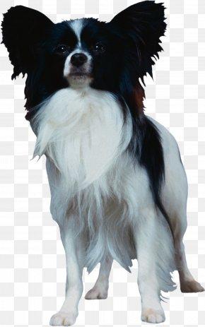 Guide Dog - Papillon Dog Phalène Dog Breed Companion Dog PNG