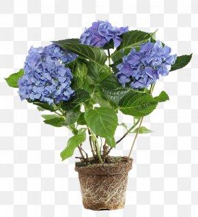 Potted Purple Flowers - Flowerpot Flower Box Hydrangea Bonsai PNG
