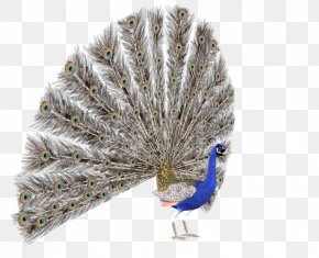 Creative Peacock - DeviantArt Photography Illustration PNG