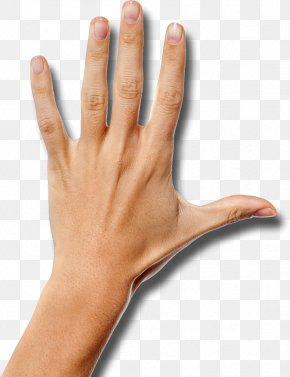 Hand - Thumb Hand Wrist Arm Palm PNG