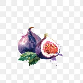 Fruit,watercolor,pomegranate,purple - Common Fig Euclidean Vector Royalty-free PNG