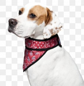 Red Collar Dog - Treeing Walker Coonhound Beagle Black And Tan Coonhound Dog Collar PNG