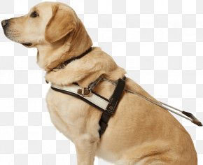 Dogs - Dog Collar Puppy Leash Dog Breed PNG