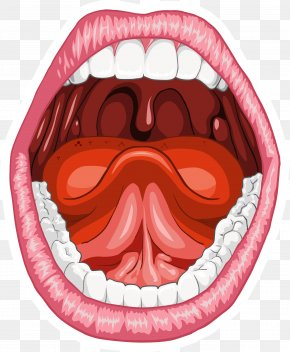 Mouth Smile - Human Mouth Anatomy Homo Sapiens Tongue PNG