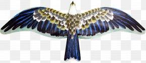 Eagle Kite Material - Flight Eagle Hawk PNG