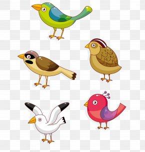 Woodpecker Bird Sparrow Seagull - Lovebird Parrot Owl Cartoon PNG