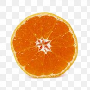 Brother Orange Circle - Tangerine Blood Orange Tangelo Clementine PNG