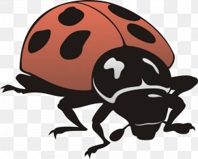 Insect - Insect General Entomology Ladybird PNG